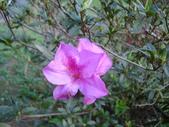 flower:DSC01593.JPG