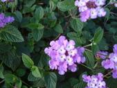 flower:DSC01594.JPG