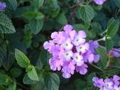 flower:DSC01595.JPG