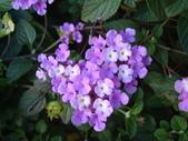flower:DSC01598.JPG