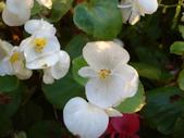flower:DSC01600.JPG