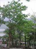 980321大津瀑布&三地門:1383763880.jpg