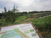 101205 騎自行車 大漢溪左岸~八里左岸:101205 015大漢溪左岸-樹林鹿角溪人工濕地.jpg