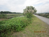 101205 騎自行車 大漢溪左岸~八里左岸:101205 016大漢溪左岸-樹林鹿角溪人工濕地.jpg