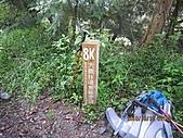 101010~12大霸尖山(第一天):101010 007大鹿林道8K.jpg