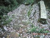 120424桐花開了 鳶山群峰-油桐花開了:120424 01往永安宮.jpg