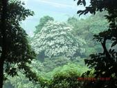120424桐花開了 鳶山群峰-油桐花開了:120424 02福德坑山.jpg