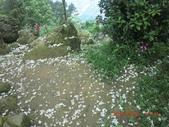 120424桐花開了 鳶山群峰-油桐花開了:120424 03福德坑山.jpg