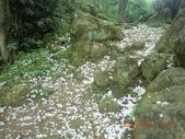 120424桐花開了 鳶山群峰-油桐花開了:120424 05福德坑山.jpg