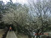 120116~17嘉南旅遊(第1天):120116 012嘉義-梅山公園.jpg