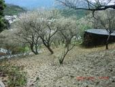 120116~17嘉南旅遊(第1天):120116 013嘉義-梅山公園.jpg
