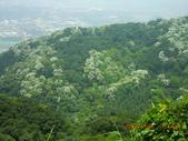 120424桐花開了 鳶山群峰-油桐花開了:120424 11五十分山 望福安宮稜線上.jpg
