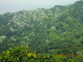 120424桐花開了 鳶山群峰-油桐花開了:120424 12五十分山 望福安宮稜線上.jpg