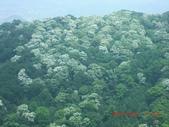 120424桐花開了 鳶山群峰-油桐花開了:120424 13五十分山 望福安宮稜線上.jpg