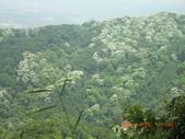 120424桐花開了 鳶山群峰-油桐花開了:120424 15五十分山 望福安宮稜線上.jpg