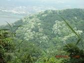 120424桐花開了 鳶山群峰-油桐花開了:120424 16五十分山 望福安宮稜線上.jpg