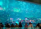 杜拜再起之過客見證:21大型購物中心的海底櫥窗前仍然人群簇擁..JPG