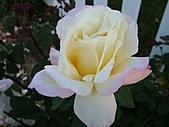 玫瑰多嬌加州尤甚:017.JPG