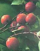 南北疆之45屋簷下的喀什(下):22-2水果紅油杏.JPG