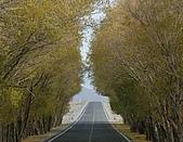南北疆之44屋簷下的喀什(上):30高原楊柳隧道.JPG