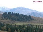 南北疆旅遊之28印象雲杉:18雲杉還有圍籬功能.jpg