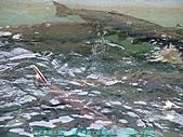 《旅次札記之問鮭魚生死為何?》:0019.JPG