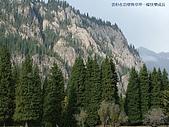 南北疆旅遊之28印象雲杉:15雲杉在岩壁與草坪一樣快樂成長.JPG