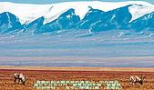 南北疆之59走在帕米爾高原上:01崑崙山白頭-新華社.jpg