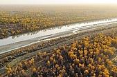 南北疆之38無語話胡楊之(下):58塔里木河2008金色胡楊.jpg