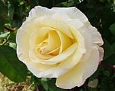 玫瑰多嬌加州尤甚:007.JPG