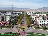 南北疆旅遊之20特克斯縣八卦城:09八卦城路樹為植物活化石小白蠟.jpg