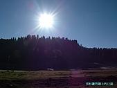 南北疆旅遊之28印象雲杉:04雲杉籬笆牆上的日頭.jpg