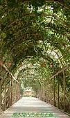 南北疆之42核桃王神木園:15神木園內的葡萄走廊.jpg