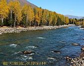 南北疆旅遊之10小河灣灣禾木村:13藍天激流水岸彩林.jpg