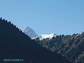南北疆旅遊之28印象雲杉:22雪峰雲杉高低前後有序.JPG