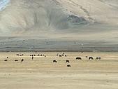 南北疆之完結篇《走在帕米爾高原上》:13牛羊之帕米爾高原牛羊.JPG