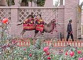 南北疆之48香妃傳奇:07香妃陵墓前玫瑰園與駱駝.JPG