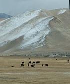 南北疆之完結篇《走在帕米爾高原上》:17牛羊之帕米爾高原牛羊11.JPG