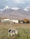 南北疆之完結篇《走在帕米爾高原上》:19高原村落牛.jpg