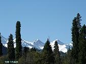 南北疆旅遊之28印象雲杉:06雪峰下的森林.JPG