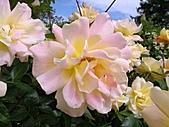 玫瑰多嬌加州尤甚:013.JPG