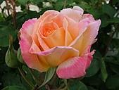 玫瑰多嬌加州尤甚:014.JPG