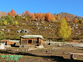南北疆旅遊之10小河灣灣禾木村:07原木建造的小木屋.jpg
