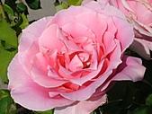 玫瑰多嬌加州尤甚:015.JPG