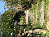 張順嬌咖啡莊園:IMG_4530.jpg