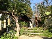 張順嬌咖啡莊園:IMG_4533.jpg