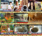 博士下鄉 咖啡實驗~台東種出 果子狸咖啡~稱台灣版的麝香貓咖啡~保留更多~綠原酸及葫蘆巴鹼!:A1新聞報導~台東果子狸咖啡~口感媲美麝香貓咖啡.jpg