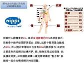 日本 NIPPI 魚鱗膠原蛋白肽:001人體內的蛋白質約三分之一是膠原蛋白