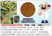 五國專利 日本胡麻鈣&六複方高單位4000FU日本納豆激酶:胡麻鈣就是從黑芝麻中所萃取的.jpg