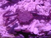 螃蟹博物館+傳藝中心:關公蟹